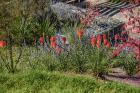kaori-garden-zahradni-architektura-levin-realizace-zahrady-17.jpg