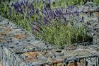kaori-garden-zahradni-architektura-levin-realizace-zahrady-19.jpg