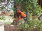 rizikove-kaceni-stromu-drevin-kaori-garden-01.jpg