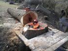 rizikove-kaceni-stromu-drevin-kaori-garden-02.jpg