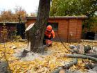 rizikove-kaceni-stromu-drevin-kaori-garden-03.jpg